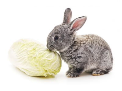 Rabbit and cabbage.